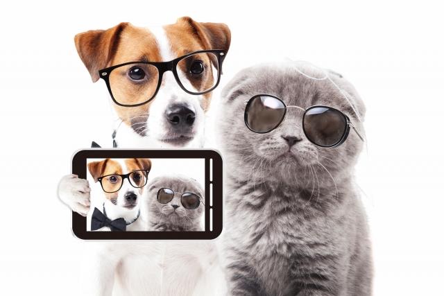 眼鏡犬と猫とスマホ